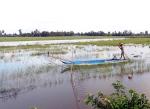 Tranh thủ khai thác thủy sản vào cuối mùa nước nổi