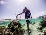 Săn bạch tuộc ở Zanzibar