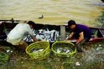 Phú Yên: Cá chết, người nuôi hoang mang