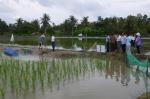 Tập huấn kỹ thuật nuôi tôm càng xanh toàn đực - lúa