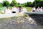 """Hiệp hội Cá tra Việt Nam: """"Huấn luyện phòng và trị bệnh trên cá tra"""""""