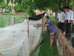 Bắc Ninh: Nuôi ếch công nghiệp trong lồng lưới cho thu nhập cao