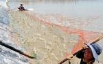 Cà Mau: Diện tích nuôi tôm thâm canh đạt gần 172 ha