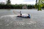 Bắc Giang: Giám sát chặt dịch bệnh thủy sản năm 2017