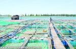 Cà Mau: Cần đẩy mạnh nuôi cá bóp