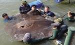 Thái Lan: Cá đuối chết hàng loạt