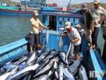 Hợp tác xã ngư nghiệp Vĩnh Hy: Nâng cao hiệu quả hoạt động