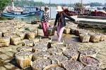 Bảo tồn nguồn cá cơm