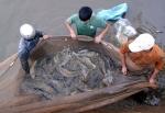 Tổng cục Thủy sản: Giao ban tháng 11