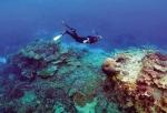 Dòng biển ấm giết chết rạn san hô