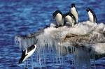 Dự án bảo tồn sinh vật biển ở Nam Cực