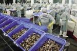 Xuất khẩu thủy sản: Cuối năm rộng cửa