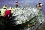 """Cá rô phi Mỹ Latinh: """"Bí kíp"""" chinh phục thị trường Mỹ"""