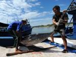 Khánh Hòa: Ngư dân lãi khá nhờ trúng cá ngừ