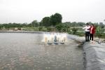 Nuôi cá theo mô hình mới ở Hòa Phong
