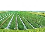 Nông nghiệp sạch: Trách nhiệm và nghĩa vụ với xã hội
