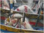 Bình Thuận: Ngư dân Phan Rí Cửa đưa máy tời thủy lực vào khai thác hải sản