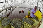Công nghệ cao cho tương lai nông nghiệp