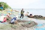 Phú Yên: Trúng đậm vẹm đá trên đầm Ô Loan