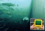 Nuôi trồng thủy sản: Sự lên ngôi của công nghệ tự động