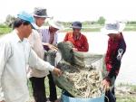 Chỉ tiêu nuôi tôm Cà Mau đến năm 2020