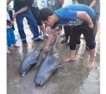 3 con cá heo mắc lưới ngư dân
