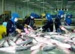 Brazil sẽ trở thành thị trường xuất khẩu cá tra lớn thứ 4 của Việt Nam?