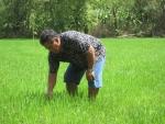 Tham vọng khôi phục vùng lúa - cá đồng