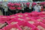 Đại gia chuỗi cá tra biến mất: Thông qua phương án xử lý nợ