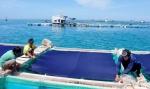 Nuôi trồng thủy sản tự phát tại Quảng Ngãi: Ô nhiễm nguồn nước