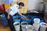Bắt quả tang hơn 20 người đang bơm tạp chất vào tôm nguyên liệu