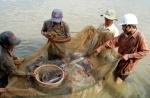 Đà Nẵng: Cung ứng thủy sản an toàn trên địa bàn thành phố