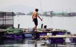 Khánh Hòa: Triển vọng từ nuôi tôm hùm xanh