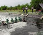 Gỡ khó cho nuôi tôm trên cát tại Quảng Ngãi