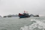 Quảng Ninh: Quảng Yên giảm tàu công suất nhỏ gặp khó khăn