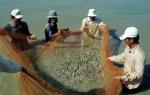 CLV Thủy sản Việt Nam 2017: Mở rộng phạm vi lựa chọn gương điển hình