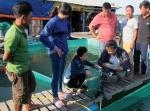 Bà Rịa - Vũng Tàu: Ngư dân đổ nợ vì cá