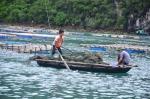 Quảng Ninh: Hàu chết từ Tiên Yên đến Móng Cái, thiệt hại 80 tỷ