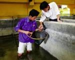 Kích dục tố trong sản xuất cá giống