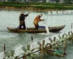 Bình Định: Hiệu quả tôm, cá xen cua an toàn sinh học