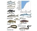 Công nghệ eADN thủy sinh trong việc nhận diện các đàn cá