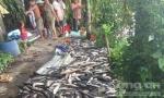 Điều tra vụ cá lóc của người dân chết bất thường