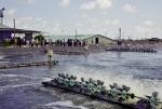 Để nuôi tôm thâm canh hiệu quả bền vững