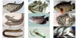 Giá bán một số loài thủy sản từ ngày 17.5.2017–24.5.2017