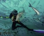 Phát triển nghề nuôi biển ở Ecuador