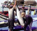 Nhập khẩu thủy sản tăng 34%