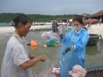 Mùa cá trích ở bãi Khem
