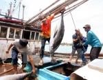 Nhiều mặt hàng thủy, hải sản ở tỉnh Bạc Liêu tăng giá mạnh