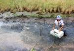 Mở cống thoát nước chống ngập úng rừng, nhiều diện tích tôm - lúa bị ảnh hưởng