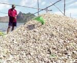 Kiên Giang: Nhanh chóng hỗ trợ hộ nuôi thủy sản